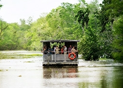 Swamp and Bayou Tour